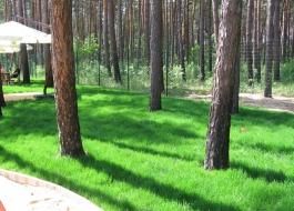 рулонные газоны воронеж