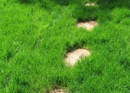 рулонные газоны воронежа
